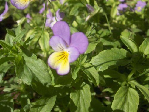 flowers-7-06-005